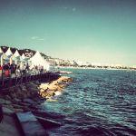 festival_81